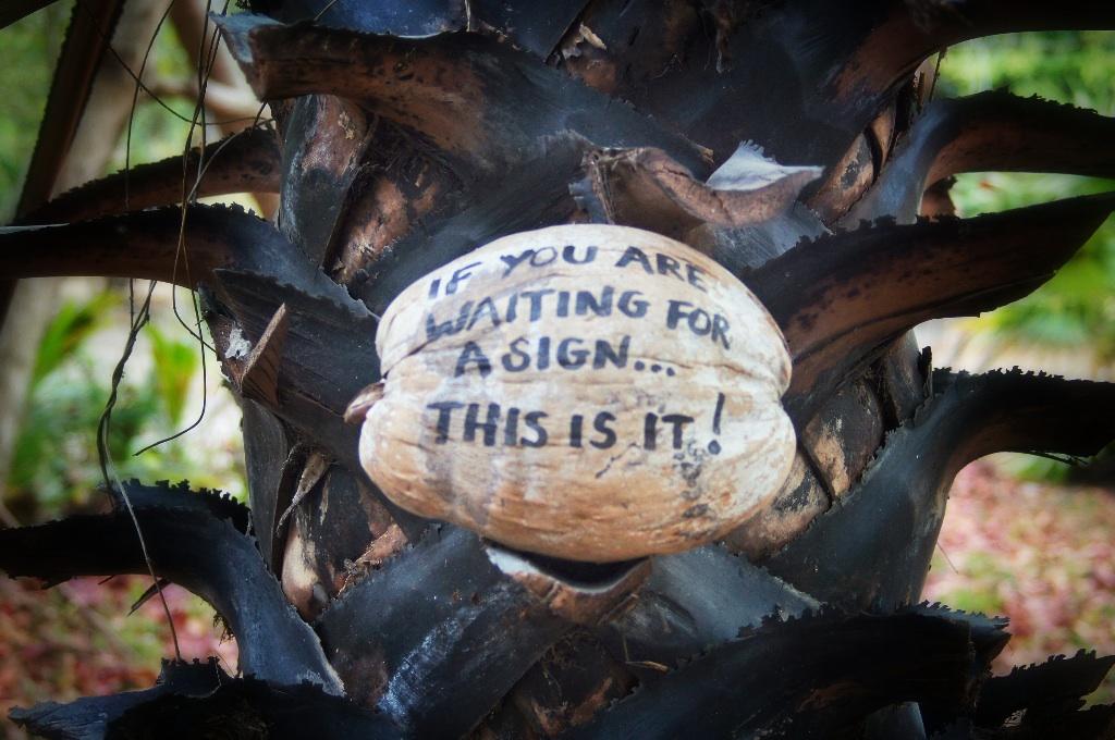Coconut wisdom.